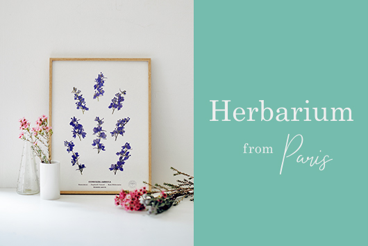 Herbarium from Paris